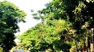 Đường Nguyễn Gia Thiều: Một không gian xanh