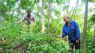 Thực hiện tốt 'Chính sách bảo vệ phát triển rừng gắn với chi trả dịch vụ môi trường rừng'