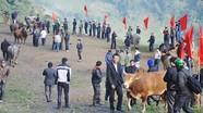 Kỳ sơn: Sôi động hội chợ trâu bò