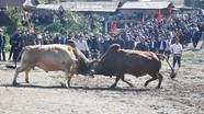 Sôi nổi Hội thi- Hội chợ trâu bò vùng biên