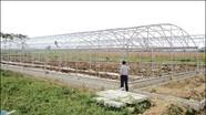 """Tái cơ cấu nông nghiệp: Những """"hình mẫu"""" trong tương lai"""