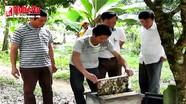 Nghề nuôi ong lấy mật