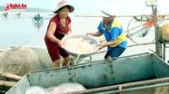 Mùa sứa ở Diễn Châu