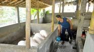 Cây, con xóa nghèo ở Tam Quang