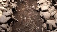 Hai bộ xương ôm nhau trong ngôi mộ cổ