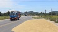 Biến quốc lộ 46 thành sân phơi lúa - nguy cơ tiềm ẩn