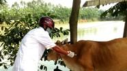 Hướng dẫn xếp lương viên chức ngành chăn nuôi và thú y