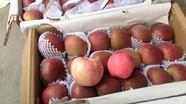 Cách nhận biết táo, cam Trung Quốc bị ngâm tẩm hóa chất