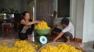 Diễn Kim: Sống lại nghề trồng dâu nuôi tằm