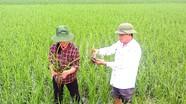 Xã Hưng Tân (Hưng Nguyên): Điểm sáng trong xây dựng nông thôn mới