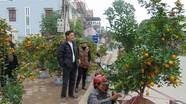 Chợ hoa cây cảnh  bạc triệu ở phố huyện