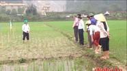 Anh Sơn triển khai mô hình thâm canh lúa cải tiến SRI
