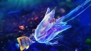 Vẻ đẹp sửng sốt của cuộc sống dưới lòng đại dương