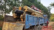 Nghệ An:  Thu giữ hơn 14 m3 gỗ vô chủ cất giấu dưới đập nước
