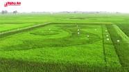 Độc đáo bản đồ Tổ quốc bằng lúa thảo dược