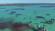 [Video] Cá voi xấu số bị 70 con cá mập hổ ăn thịt
