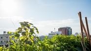 Thú vị những khoảnh vườn trên sân thượng chung cư Quang Trung