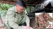 Sản xuất thực phẩm sạch từ nuôi giun quế