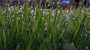 Sản xuất nhiên liệu hydro từ cỏ