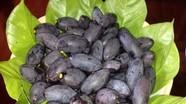 Vị béo bùi quả trám quê xứ Nghệ