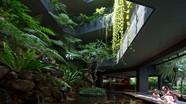 Độc đáo 'Vườn bách thảo' trong ngôi nhà 4 tầng