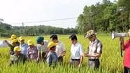 Tân Kỳ phấn đấu đạt 1.000 ha lúa chất lượng cao