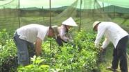 Quỹ bảo vệ và phát triển rừng cấp tỉnh trong Kế hoạch hành động REDD+