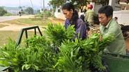 Thí điểm chi trả dịch vụ môi trường rừng đối với các cơ sở sản xuất công nghiệp