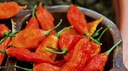 Rách thực quản vì lỡ ăn loại ớt cay nhất thế giới