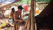 Thâm nhập 'đại công trường' đào vàng trái phép ở Nghệ An