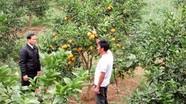 Không phát triển thế mạnh cây cam là sai lầm!