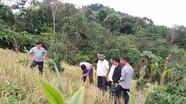 Kỳ Sơn triển khai trồng chè Shan tuyết theo hướng VietGAP