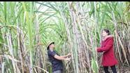 Tân Kỳ: Tăng thu nhập cho nông dân từ các mô hình