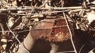 Cần giải quyết dứt điểm tình trạng lấn chiếm đất lâm nghiệp ở Tân Kỳ