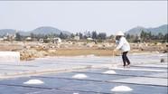 Trả lời kiến nghị cử tri Quỳnh Lưu về chính sách hỗ trợ giá muối