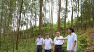 Nhà máy gỗ MDF Nghệ An: Chính sách thỏa đáng đảm bảo quyền lợi người trồng rừng
