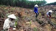 Tích cực trồng rừng vụ xuân