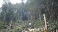 Phát huy lợi thế trồng rừng gỗ lớn