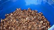Món ngon từ con cáy sông Lam