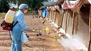 Hoãn họp để phòng chống dịch cúm gia cầm