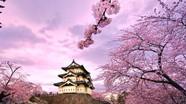 Nhân tài sẽ có cơ hội lấy vĩnh trú ở Nhật chỉ sau 1 năm
