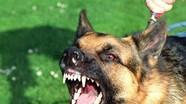 Những điều cần biết về bệnh dại ở chó