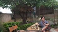 Nhà vườn hơn 1.000 m2 trồng cây, nuôi lợn của Quang Tèo