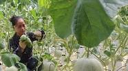 Miễn tiền sử dụng đất cho doanh nghiệp đầu tư nông nghiệp