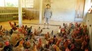 Lần đầu tiên Nghệ An công bố nhãn hiệu tập thể nuôi gà cỏ Thanh Chương