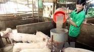 Lợn, gia cầm ế ẩm, vẫn chi 33.000 tỷ nhập thức ăn chăn nuôi