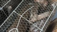 Phát hiện 7 con khỉ vô chủ trên tàu thống nhất
