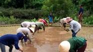 Nông dân gieo cấy vụ hè thu muộn nhất Nghệ An
