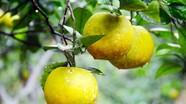 Cử tri kiến nghị hỗ trợ địa phương xây dựng thương hiệu sản phẩm nông nghiệp sạch