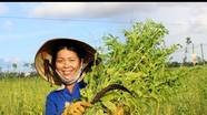 Nông dân Diễn Châu được mùa vừng